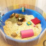 10 Creative Ways to Repurpose Your Kiddie Pool| Kiddie Pool, DIY Kiddie Pool, Kiddie Pool Uses, Uses for a Kiddie Pool, Repurpose, Repurpose Projects, Popular Pin #KiddiePool #DIY #Kids