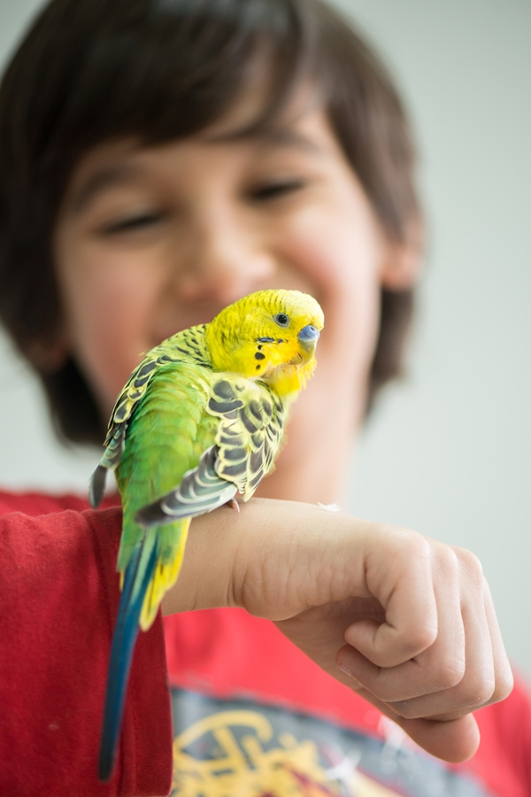 So your kids are begging for a pet but you don't know what the best pets for kids are. You're in luck. We have a list of the best pets for kids. Birds are a great choice but they do require a bit of work.