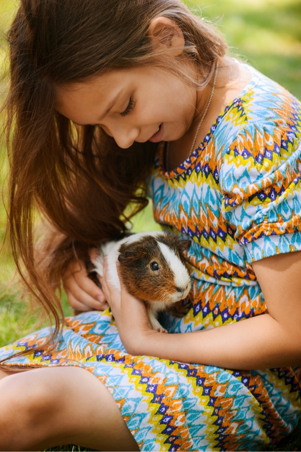 So your kids are begging for a pet but you don't know what the best pets for kids are. You're in luck. We have a list of the best pets for kids. Guinea pigs are a great choice.
